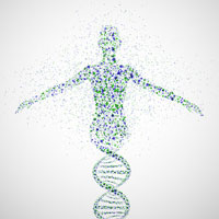 Corps humain : ADN