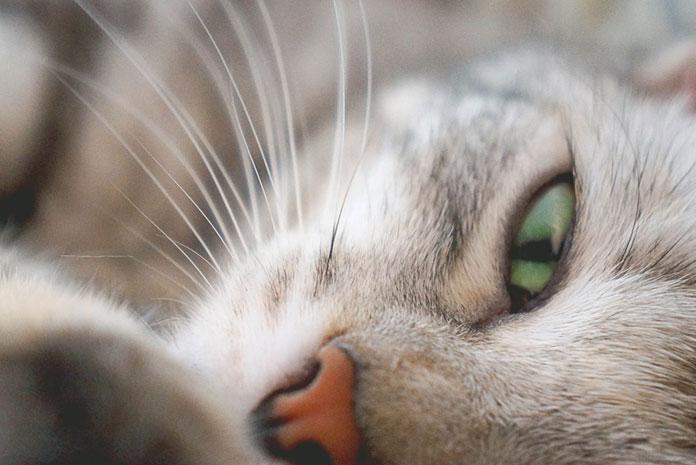 Au japon des architectes inventent des maisons pour chats for Dictionnaire des architectes