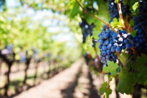 investir en vin d'autres pays