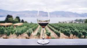 tendances investir dans le vin